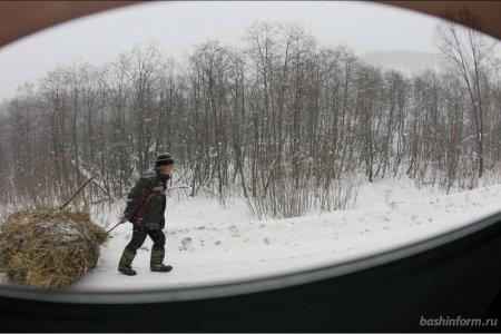 Госсобрание Башкортостана приняло закон о валежнике, снимающий ограничения на его заготовку