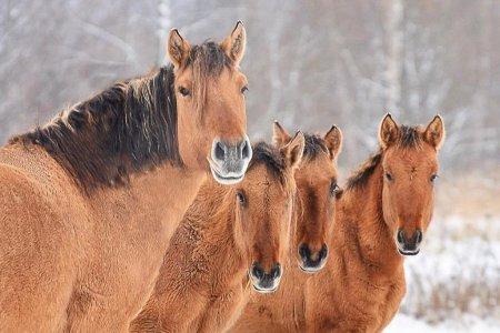 Радий Хабиров пригласил жителей Башкортостана на первый конный турнир среди районов республики