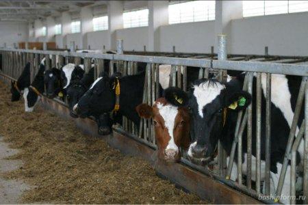 Башкортостан предложил увеличить размеры грантов для фермеров