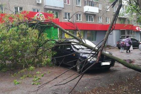 В Уфе на несколько автомобилей рухнули деревья