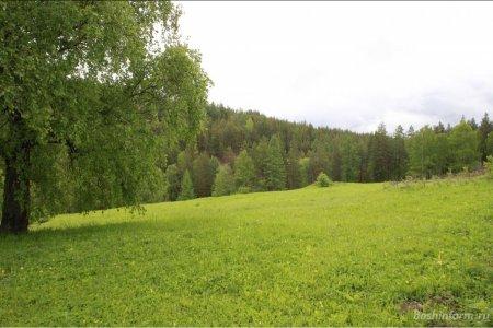 В Башкортостане сняли ограничения пребывания граждан в лесах