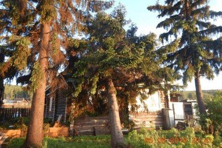 В Башкортостане многолетнее дерево рухнуло на частный дом