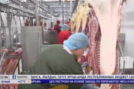 В Мелеузовском районе республики открылось новое  сельхозпредприятие — хладобойня «Строгонов».