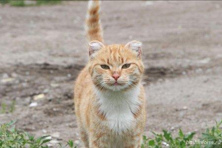В Башкортостане впервые появится зоогостиница