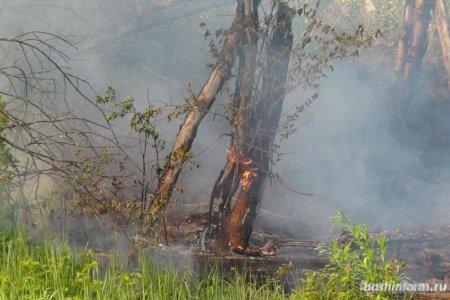В Башкортостане горит 76 гектаров леса