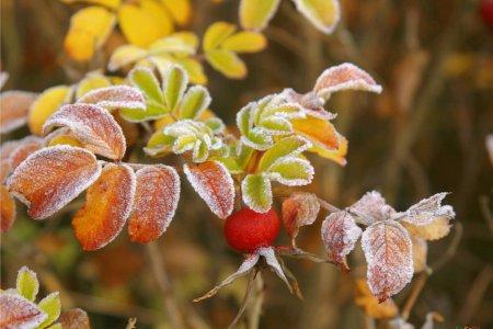 В Башкортостане МЧС предупреждает о заморозках до -2 градусов