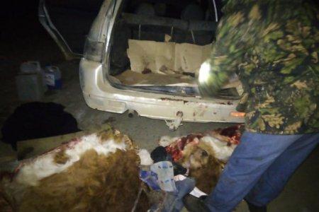 Житель Башкортостана прикармливал чужих коров, а затем убивал и отрезал уши