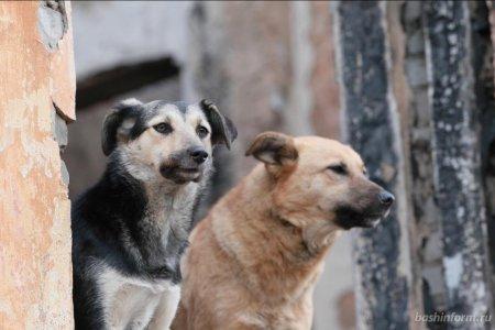 В Башкортостане на закон об ответственном обращении с животными не хватило бюджета