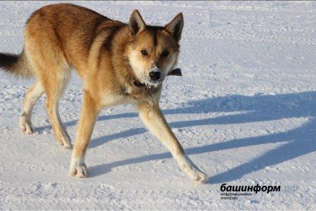 За год в Башкортостане зарегистрировано 15 случаев заболевания животных бешенством