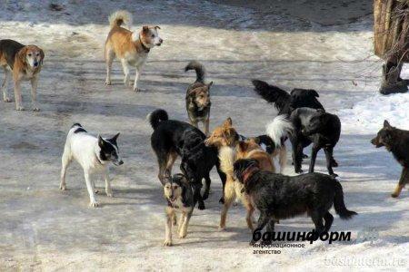 Жители Уфы обратились к главе республики с проблемой бродячих собак