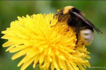 В Башкортостане предложили учредить День пчеловода