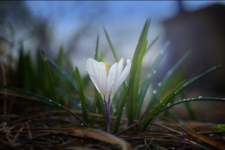В последние дни марта в Уфе потеплеет до +10