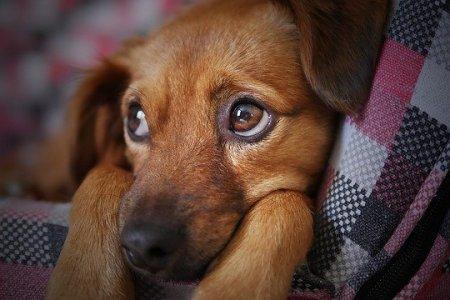Россиян начнут штрафовать за лающих по ночам собак и шум автосигнализации