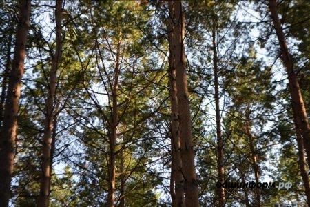 В Уфе девушка упала с дерева, пытаясь сделать селфи